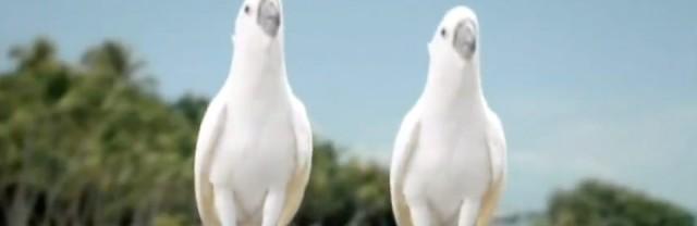 Raffaello Werbung Song 2012